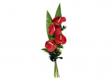 Funeral Red Anthurium