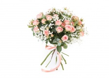 Pink rose with gypsophila