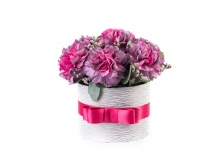 Flower box Dianthus